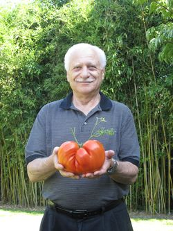 Rende_Frank-King Sized Tomato in Queen City-both hands